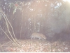 leopard-taken-in-lhuntse-during-2004